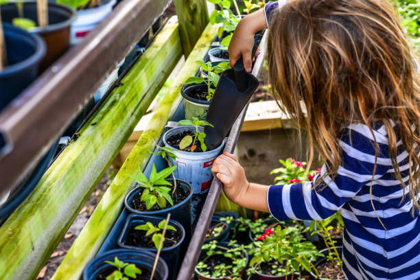 Child planting in the community garden stock photo