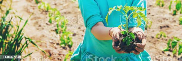 Child plants a plant in the garden selective focus picture id1146075648?b=1&k=6&m=1146075648&s=612x612&h=rvavu1az2wfmvktuwr gvgfz7zrs7hu k9ecei1crau=