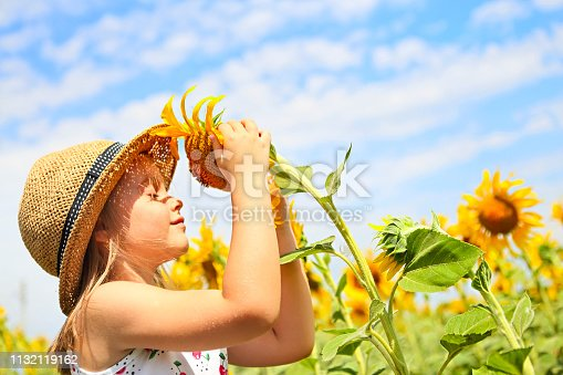 istock Child playing in sunflower field on sunny summer day 1132119162