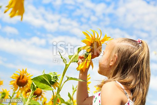 istock Child playing in sunflower field on sunny summer day 1132119222