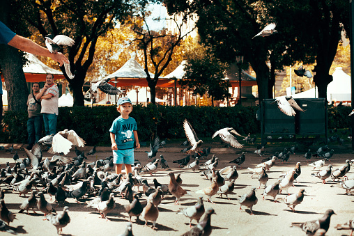child playing to scare away pigeons