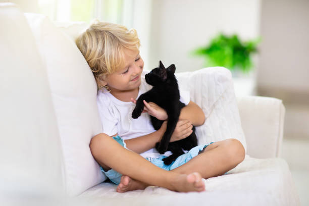 Child playing with baby cat. Kid and kitten. Child playing with baby cat. Kid holding black kitten. Little boy snuggling cute pet animal sitting on white couch in sunny living room at home. Kids play with pets. Children and domestic animals. black cat stock pictures, royalty-free photos & images