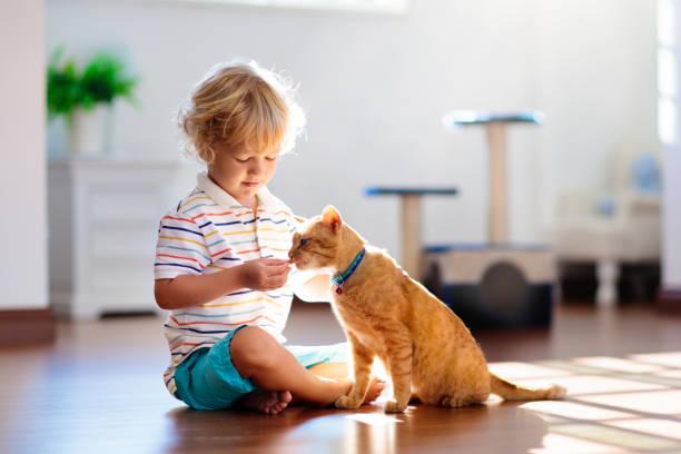 barn leker med katten hemma. barn och hus djur. - katt inomhus bildbanksfoton och bilder