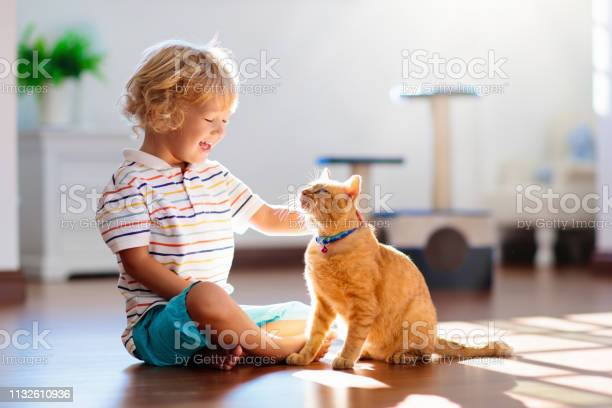 Child playing with cat at home kids and pets picture id1132610936?b=1&k=6&m=1132610936&s=612x612&h=bg bx6 rqaufqn1bhbi85brazxaqxd8uy3dymbhef94=