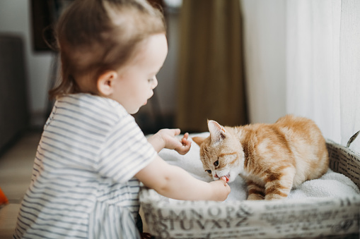 Child playing with cat at home. Kids and pets.