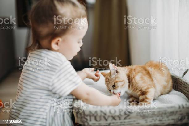 Child playing with cat at home kids and pets picture id1154630603?b=1&k=6&m=1154630603&s=612x612&h=k1m5rlwtoewqjwzwuomqnumbso2lzcbos7brhjourca=