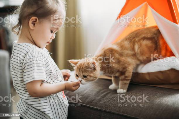 Child playing with cat at home kids and pets picture id1154630965?b=1&k=6&m=1154630965&s=612x612&h=yep hi tlft4z6kpxcl mp7thi4ytimj 9uukxb rts=