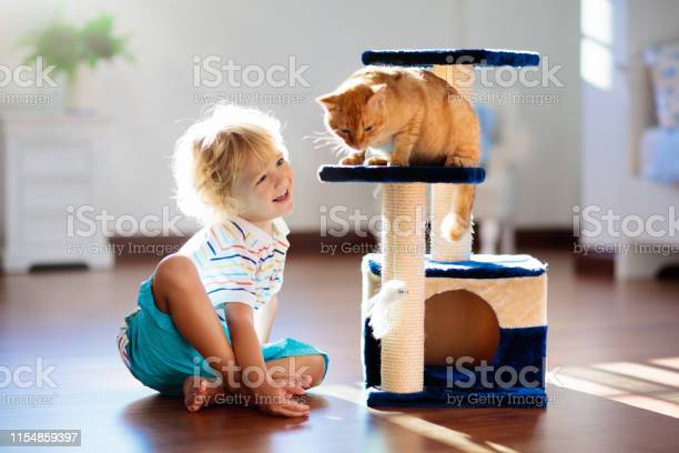 Child playing with cat at home kids and pets picture id1154859397?b=1&k=6&m=1154859397&s=612x612&h=fewvil lppltmbqbjeyitq49uiktsrkd2wklzibcr2a=