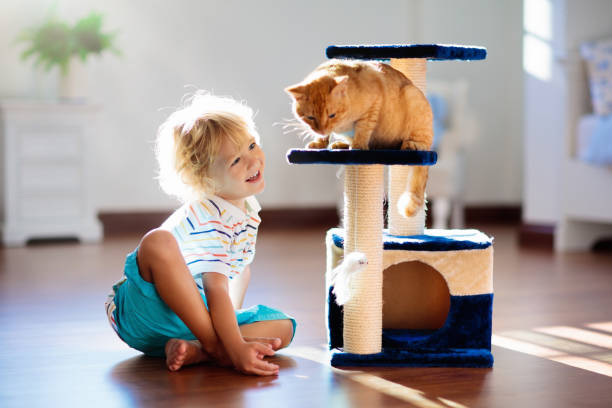 Child playing with cat at home kids and pets picture id1154859397?b=1&k=6&m=1154859397&s=612x612&w=0&h=p3pztvbmaky idpndzyq6d1m0nv3i2bzrk0drfsrnd8=