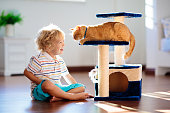 istock Child playing with cat at home. Kids and pets. 1251205031