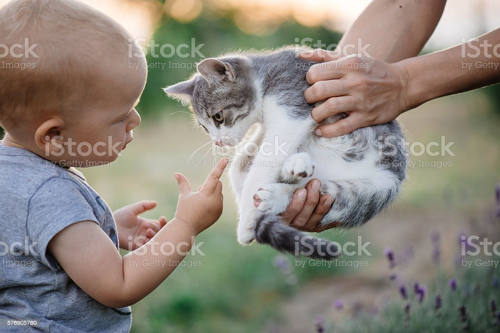 Child playing with cat in garden. - Photo