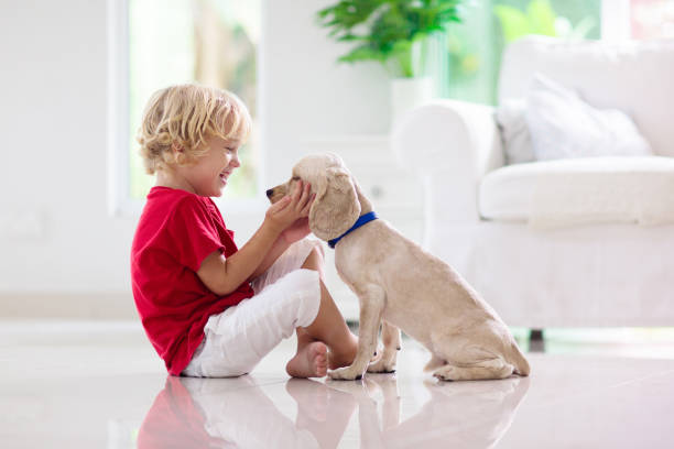 Child playing with dog. Kids play with puppy. stock photo