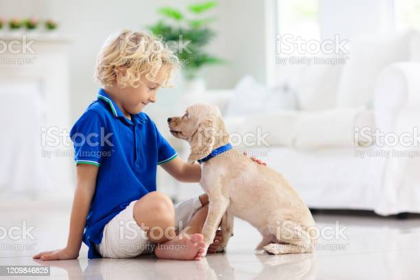 Child playing with dog kids play with puppy picture id1209846825?b=1&k=6&m=1209846825&s=612x612&h=aeh8qprqdmiaykbb eq34tep8wvplw8vnoptjey7bvw=