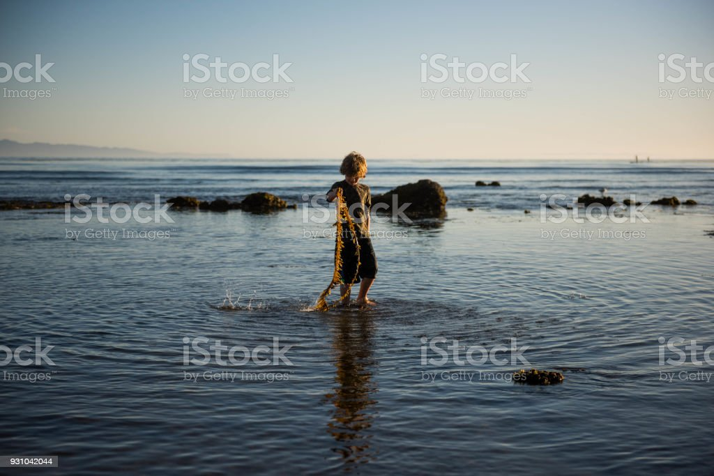 Child playing with seaweed in a beautiful tide pool stock photo