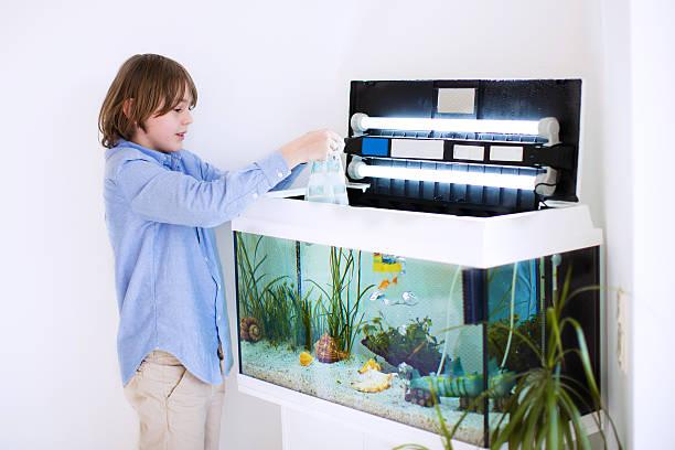 child putting new fish in an aquarium - home aquarium stock pictures, royalty-free photos & images