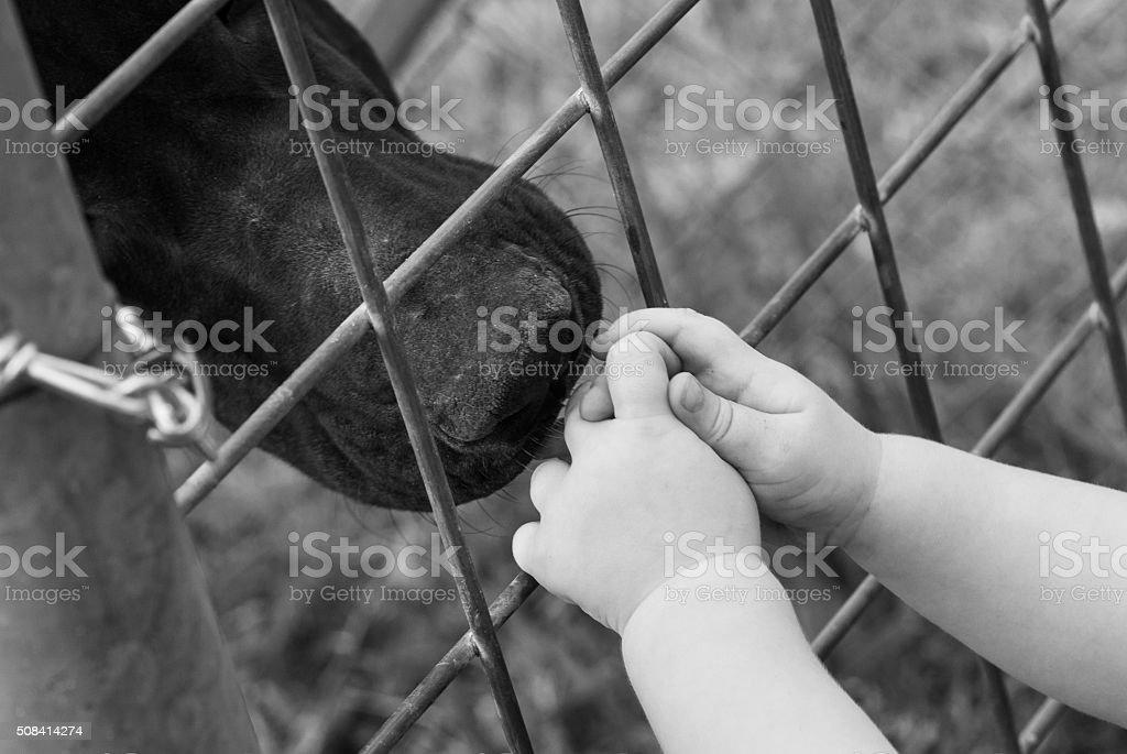 Child safe with dog behind fence stock photo