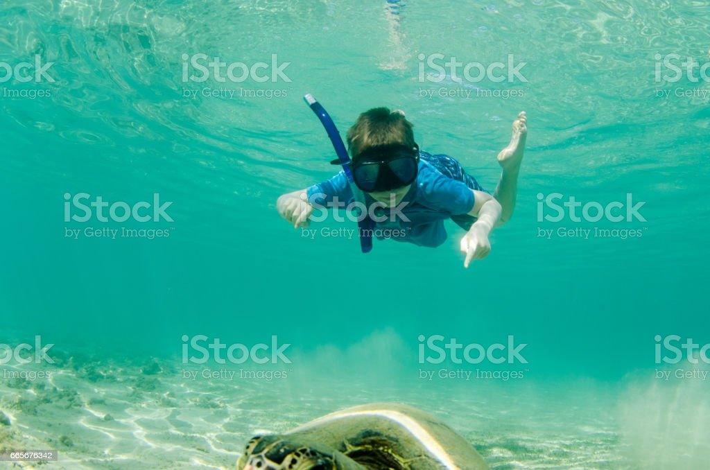 Child seeing a sea turtle for the first time in Hawaii stock photo