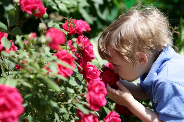 Child smelling rose picture id938155236?b=1&k=6&m=938155236&s=612x612&w=0&h=whkqgpzn3on2qyupsqsewmyqmypvoqpoe c0ho6sybi=