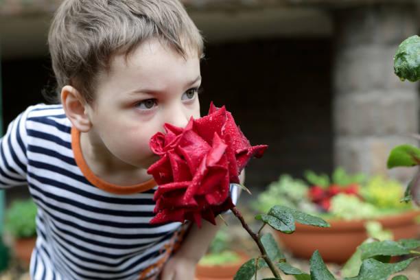 Rosa que huele niño - foto de stock