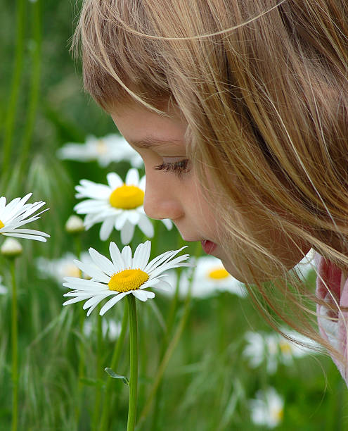 Child Smelling the Daisies stock photo