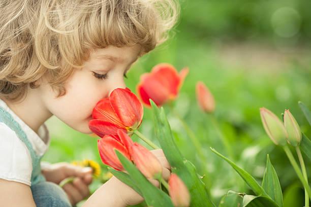 Criança cheirando Tulipa - foto de acervo