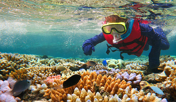 child snorkeling in great barrier reef queensland australia - underwater diving stock photos and pictures