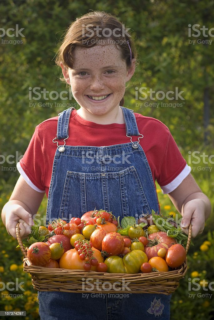 Child Vegetable Gardener with Homegrown Produce, Heirloom Tomato Harvest royalty-free stock photo