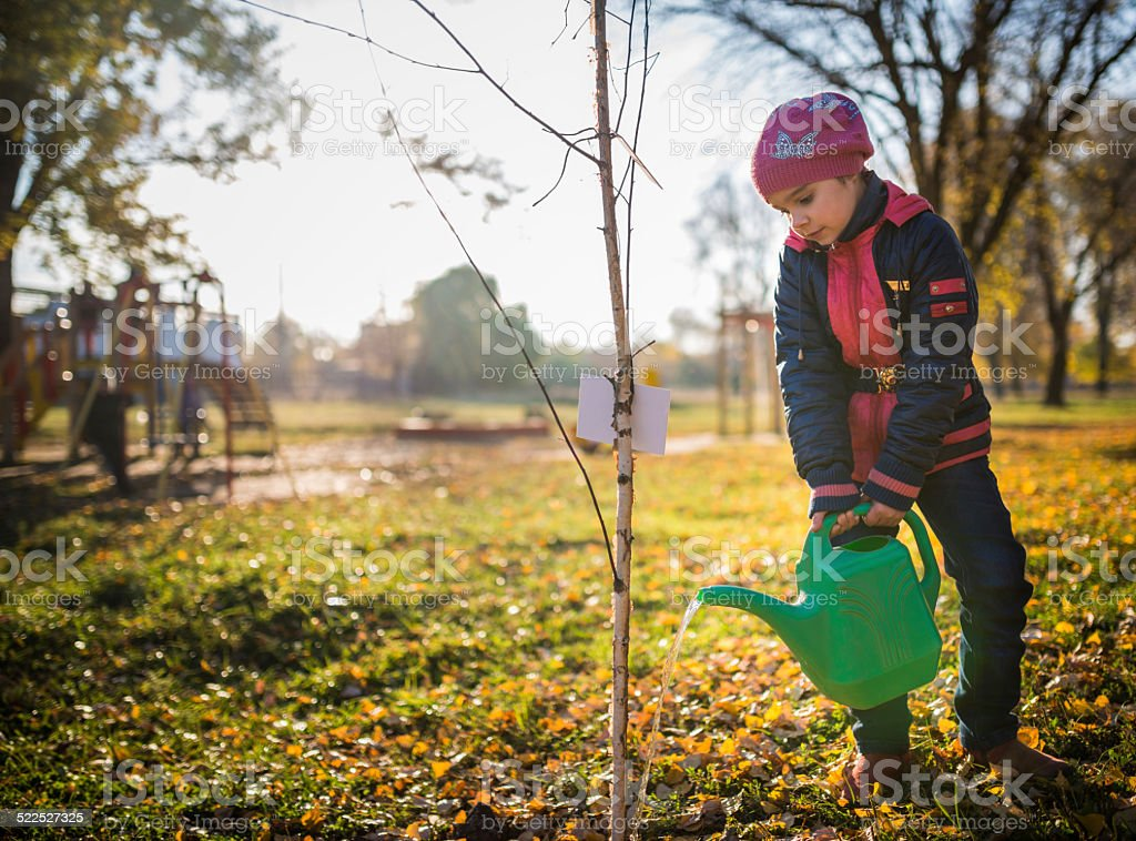 Child watering tree stock photo
