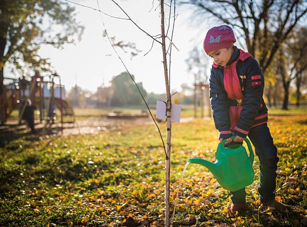 Child watering tree stock photo