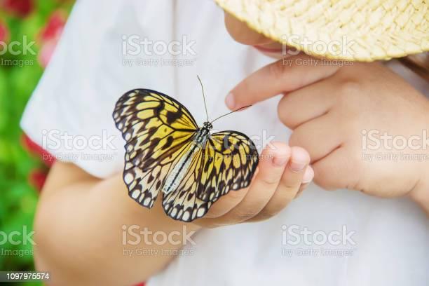 Child with a butterfly idea leuconoe selective focus picture id1097975574?b=1&k=6&m=1097975574&s=612x612&h=htup5sgbqix6thc2kh1nqgvbbmgm4jho4hvadkoddqs=