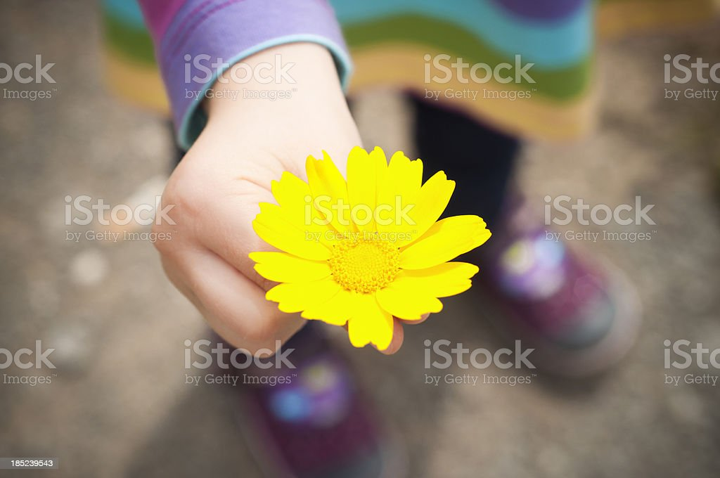 Child with a yellow flower stock photo