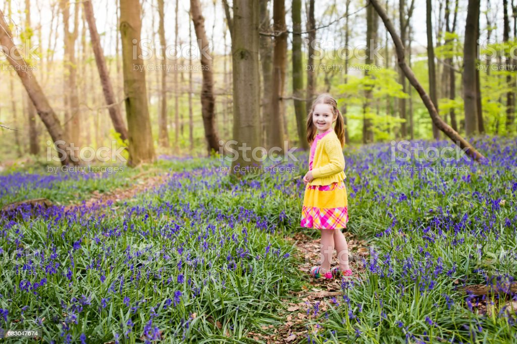 Child with bluebell flowers in spring forest foto de stock royalty-free