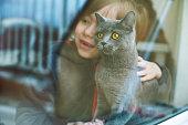 Happy child with British shorthair cat.