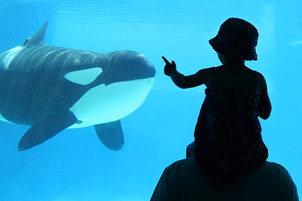 child with dad at aquarium - animals in captivity stock pictures, royalty-free photos & images