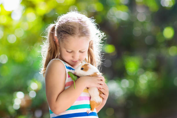 Child with guinea pig cavy animal kids and pets picture id1009213524?b=1&k=6&m=1009213524&s=612x612&w=0&h=lj4prmnl d m8l9tnjz aj0ykgcortzgs3tkfxdhla4=