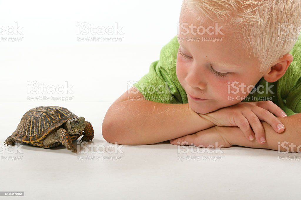 Child with pet turtle royalty-free stock photo