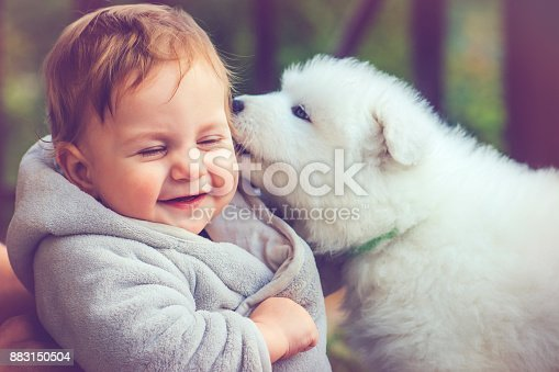 istock Child with samoyed puppy 883150504