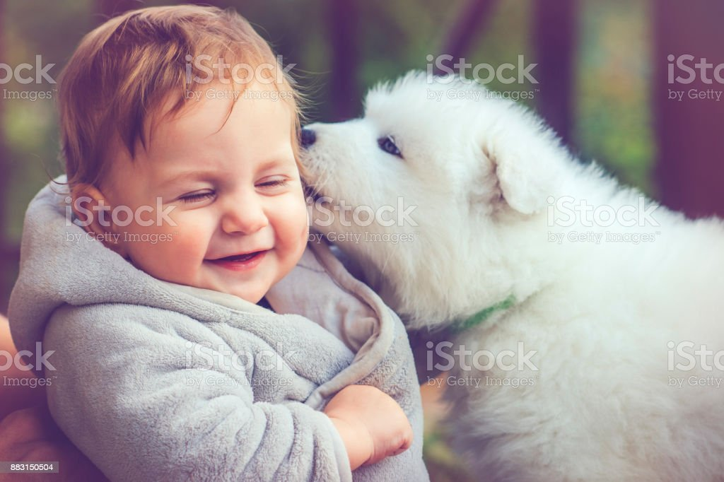Child with samoyed puppy stock photo