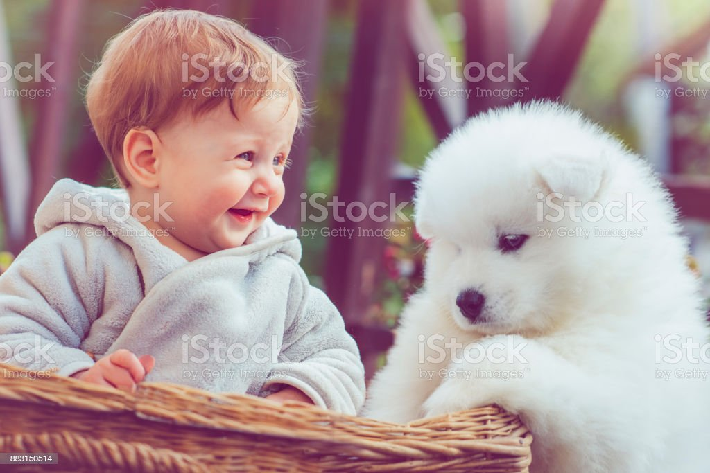 Child With Samoyed Puppy Stock Photo Download Image Now Istock