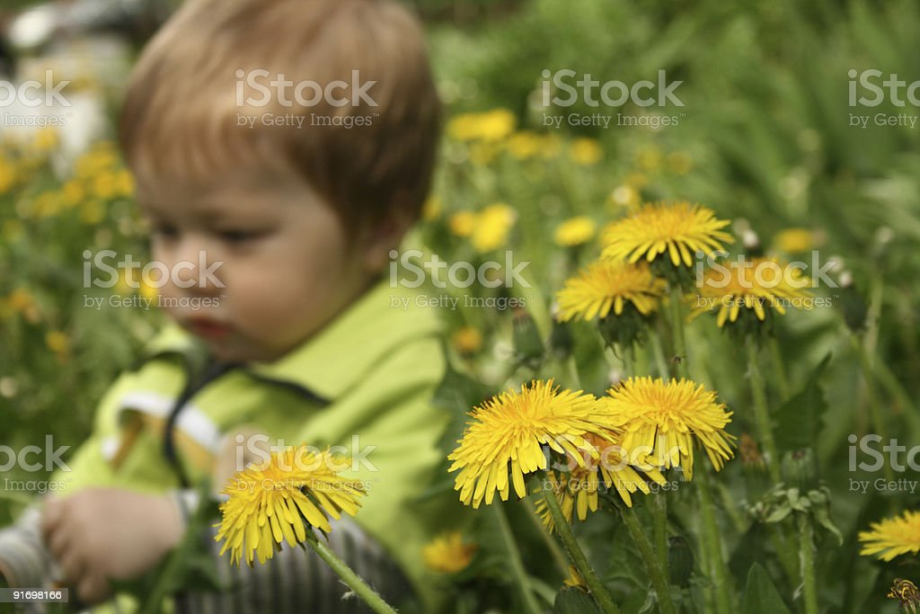 Child with the dandelion royalty-free stock photo