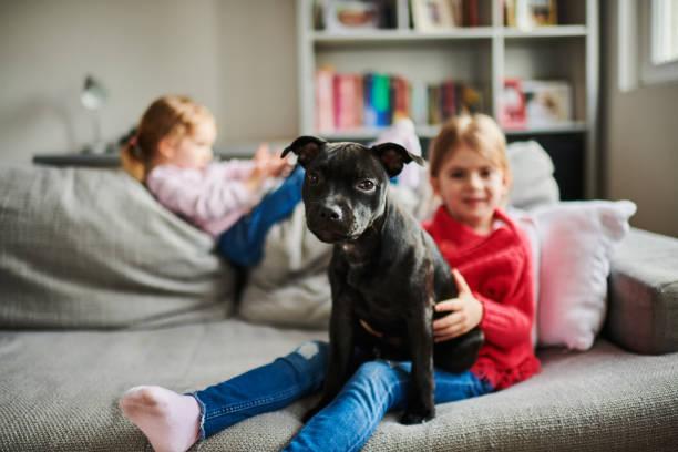kinder und ein hund - pitbull welpen stock-fotos und bilder