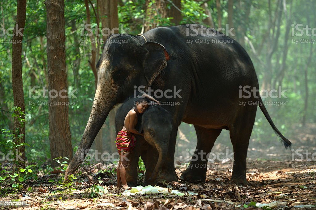 Children and elephant with my friend stock photo