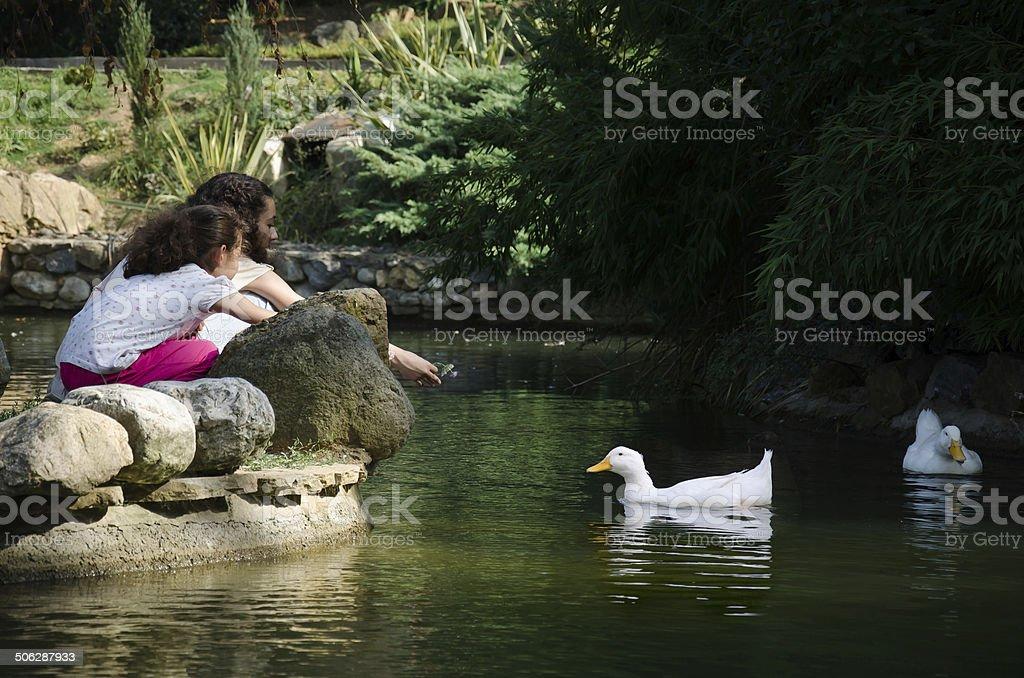 Children anf ducks stock photo