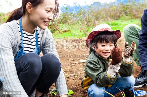 istock Children are digging vegetables with parents 1066405784