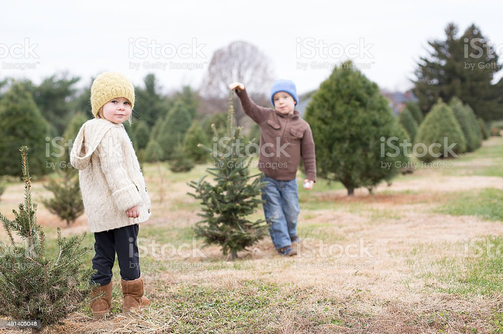 Children at a Christmas Tree Farm stock photo