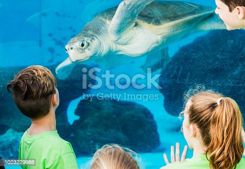 A group of elementary school students on a field trip to a marine education park. They are looking through the underwater window of an large aquarium.  A sea turtle is looking back at them.