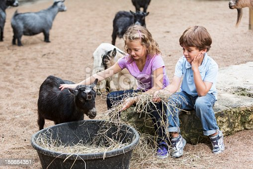 Children (7 and 5 years) at petting zoo, feeding goats. Property release on file.