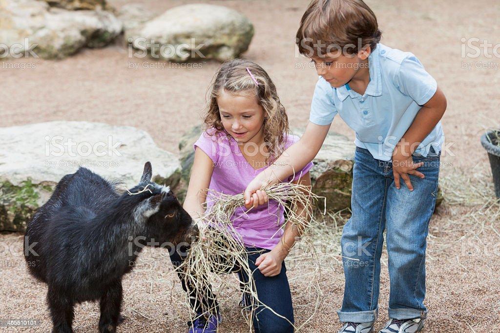 Children at petting zoo stock photo