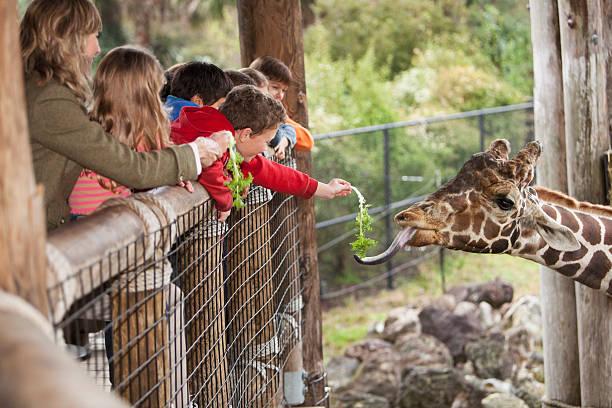 kinder, die fütterung von giraffen im zoo - vorschulzoothema stock-fotos und bilder