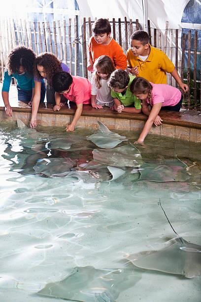 kinder im zoo stingray-ausstellung - vorschulzoothema stock-fotos und bilder